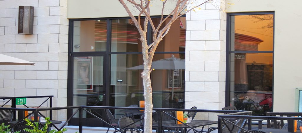 What You Need to Know About Security Window Film